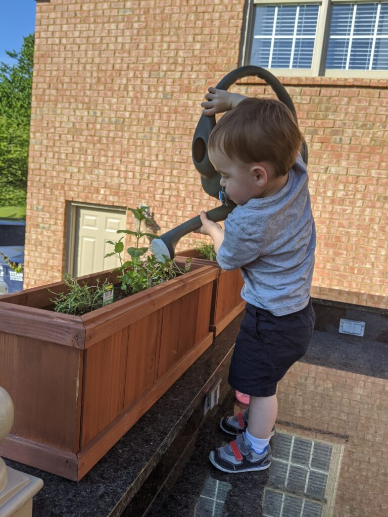 A young child helping water the herb garden