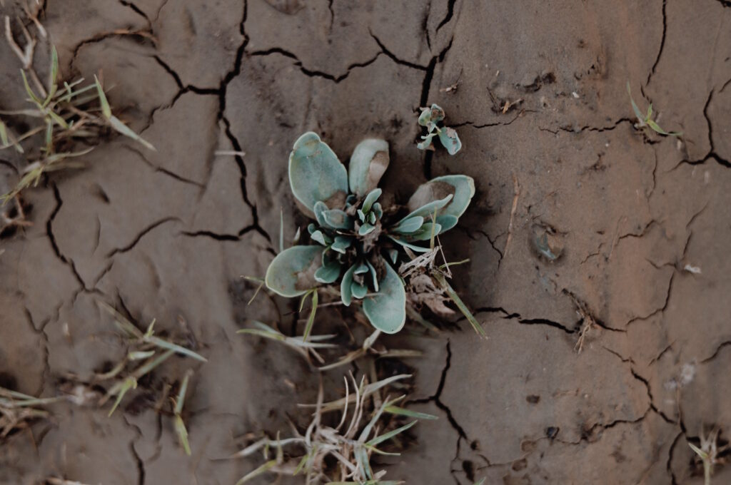 Image of packed dirt with plants growing out of the cracks.