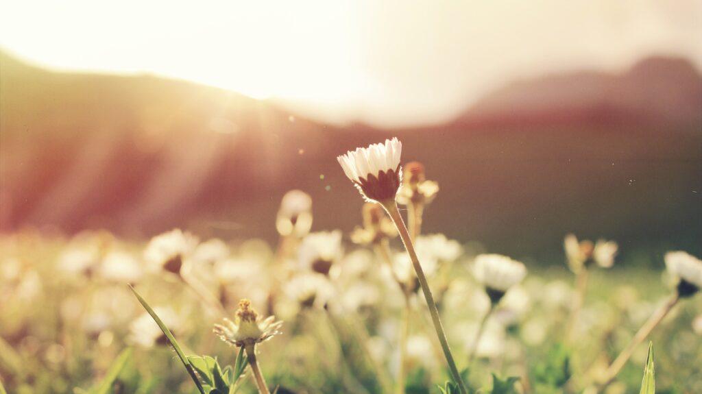 Image of flowers growing in a field