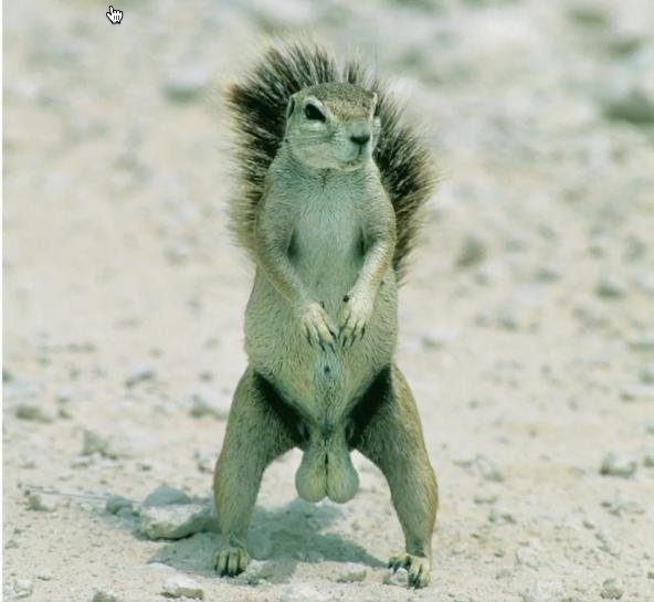 A fearless squirrel